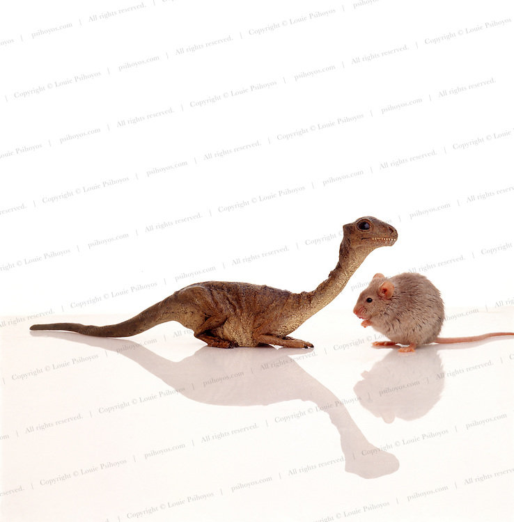 """A nest of Mussaurus """"mouse lizards"""" prosauropods of the Late Triassic and some of the smallest dinosaur specimens ever found were discovered near Tucuman in Argentina.  Model by artist Matt R. Smith."""