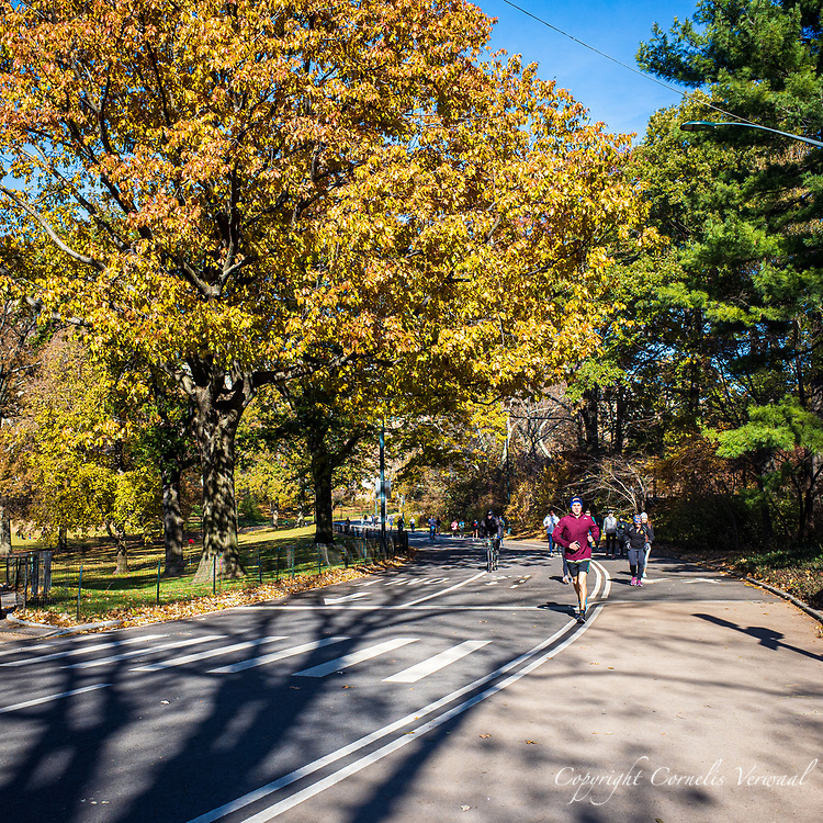 There is still some Autumn color along the West Drive in Central Park today Nov. 23, 2019.