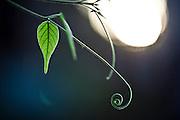 Nova Lima_MG, Brasil...Estacao Ecologica de Fechos em Nova Lima, Minas Gerais. Na foto detalhe de uma planta...Fechos Ecological Station in Nova Lima, Minas Gerais. In this photo a plant...Foto: JOAO MARCOS ROSA / NITRO