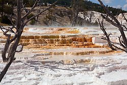 Wyoming:  Canary Springs in the Mammouth area of Yellowstone National Park.