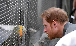 Prince Harry meets a parrot called Polly during a visit to the Botanic Gardens in Kingstown, Saint Vincent and the Grenadines, during the second leg of his Caribbean tour.