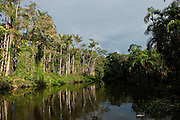Flooded Igapo forest.<br /> Cocaya River. Eastern Amazon Rain Forest. Border of PERU &ECUADOR. South America