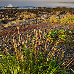 Grasses grow above the high tide line at Seawall in Maine's Acadia National Park.