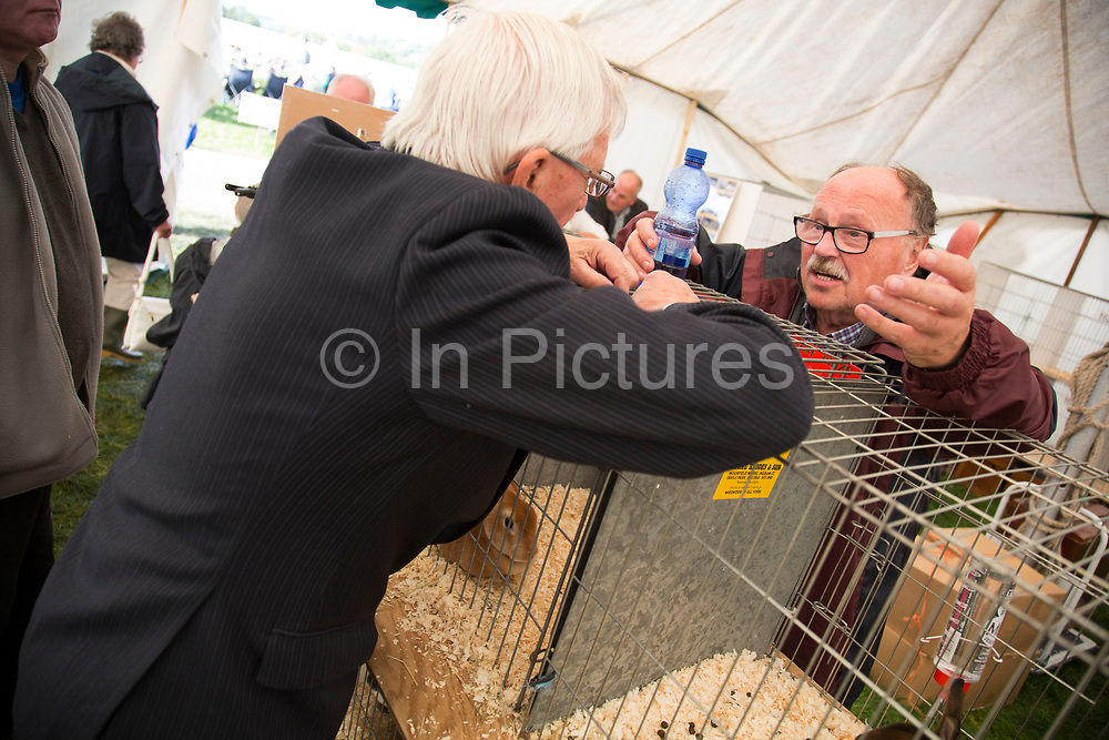 Owners and competitors having a chat over at the rabbit tent. 'Pateley Show', as the Nidderdale Show is affectionately known, is a traditional Dales agricultural show for the finest livestock, produce and crafts in the Yorkshire Dales. Held in the picturesque surrounds of Bewerley Park, Pateley Bridge, is one of the county's foremost shows. It regularly attracts crowds of 17,000 and traditionally marks the end of the agricultural show season.