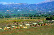 Agricultural landscape and limestone mountain range near Fethiye, Mugla Province,  Turkey