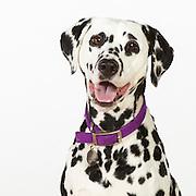 20120326 Large Dogs/Karen