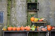 Nederland, Groesbeek, 10-10-2014 Pompoenverkoop bij een boer aan huis. Als extra bijverdienste verkopen veel boeren pompoenen en kalebassen. Voorbijgangers kunnen een pompoen kopen om als sierobject te hebben of om soep van te maken.FOTO: FLIP FRANSSEN/ HOLLANDSE HOOGTE