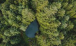 THEMENBILD - ein Teich mitten im Wald, aufgenommen am 25. August 2019 in Bad Fusch, Oesterreich // a pond in the middle of the forest in Bad Fusch, Austria on 2019/08/25. EXPA Pictures © 2019, PhotoCredit: EXPA/ JFK
