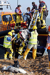 © Licensed to London News Pictures. 09/10/2021. Dungeness, UK. RNLI personnel help migrants ashore at Dungeness in Kent after crossing the English Channel. Hundreds of migrants have made the crossing in the calm weather this week. Photo credit: Sean Aidan/LNP