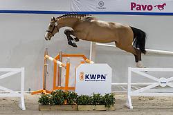 143, Nautulus<br /> KWPN Hengstenkeuring 2021<br /> © Hippo Foto - Dirk Caremans<br />  02/02/2021
