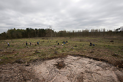 Team of people looking for burrows, part of Field cricket Gryllus campestris translocation project, RSPB Farnham Heath Nature Reserve, Surrey, April