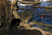 Image of beachcombing at Seal Rock State Wayside, Oregon, Pacific Northwest, model released by Randy Wells