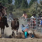 Greg Lamb from Gore misses his steer and hits the dirt during the Open Steer Wrestling competition at the Wanaka Rodeo. Wanaka, South Island, New Zealand. 2nd January 2012
