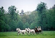 Horse and carriage being driven in Windsor Great Park, UK
