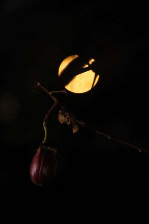 El guayacán y la luna / Contadora, Panamá.<br /> <br /> Edición de 10 | Víctor Santamaría.