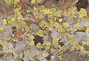 Yellow and white lichen grows a pattern on a rock near Gasthaus Passo di Giau (2236 meters) in the Dolomites (Dolomiti, a part of the Southern Limestone Alps), northern Italy, Europe. The Dolomites were declared a natural World Heritage Site (2009) by UNESCO.