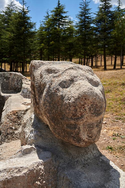 Hittite Lion sculptures of Temple I, Hattusa (also Ḫattuša or Hattusas) late Anatolian Bronze Age capital of the Hittite Empire. Hittite archaeological site and ruins, Boğazkale, Turkey.