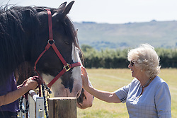 July 4, 2018 - Eglwyswrw, United Kingdom - Image licensed to i-Images Picture Agency. 03/07/2018. Eglwyswrw, Wales, United Kingdom. The Prince of Wales and the Duchess of Cornwall visit Dyfed Shire Horse Farm in Eglwyswrw , Wales, United Kingdom.  Dyfed Shire Horse Farm is a family run enterprise that has been breeding the Dyfed bloodline of Shire Horses for almost 40 years, on a farm that has been in the family since 1849. (Credit Image: © Pool/i-Images via ZUMA Press)