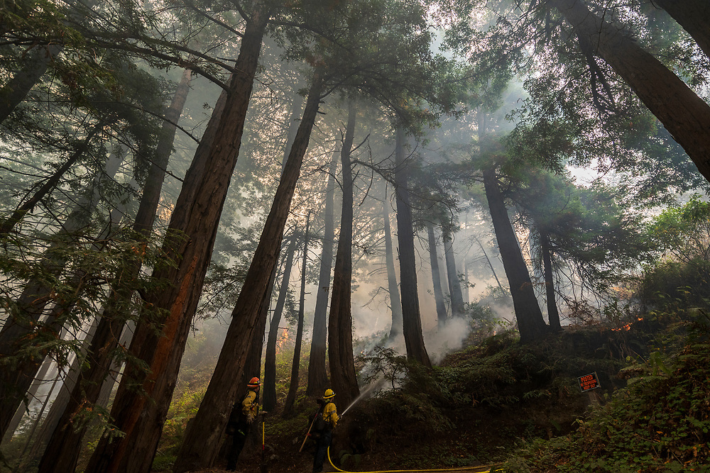 Firefighters monitor a controlled burn at Limekiln State Park to help fight the Dolan Fire near Big Sur, Calif. on Sept. 11, 2020.