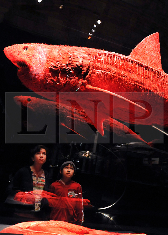 © Licensed to London News Pictures. 03/04/2012. London, UK Brother and sister Anna (12) and Mondo (10) Rain look at a plastinated shark. The launch of The Natural History Museum's Animal Inside Out exhibition. The exhibition is the UK premiere from the team behind Gunther von Hagens' Body Worlds shows, with almost 100 specimens on show. Animal Inside Out runs from April 6 April to September 16 at the Natural History Museum, London. Photo credit : Stephen SImpson/LNP