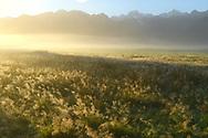 Oceania; New Zealand; Aotearoa; South Island; West Coast,  South Westland, Southern Alps near thetown of  Fox Glacier