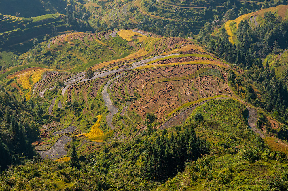CHINA, Guizhou Province, view of rice fields near Basha village. This area lies in a valley of rugged mountain to the west of Congjiang county of southeast Guizhou. Here live the Dong hill tribe people.