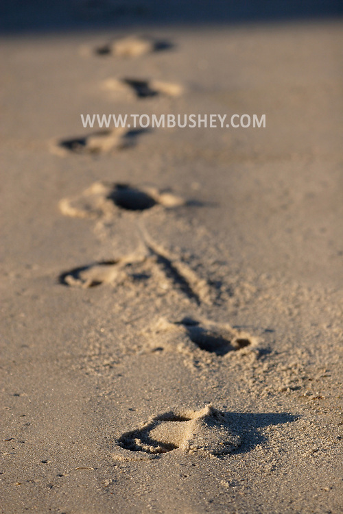 Beach Haven, NJ - Footprints are left in the sand on the beach at Long Beach Island on July 11, 2007.