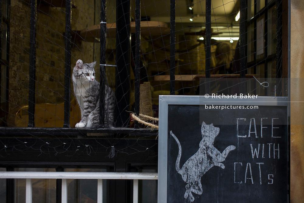 A kitten sits on the ledge outside London Cat Village in Rivington Street, Shoreditch.
