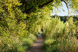 Trail to Greer Island in Lake Worth, Fort Worth Nature Center, Fort Worth, Texas USA. Greer Island is the home of the famed Lake Worth Monster, or Goatman.