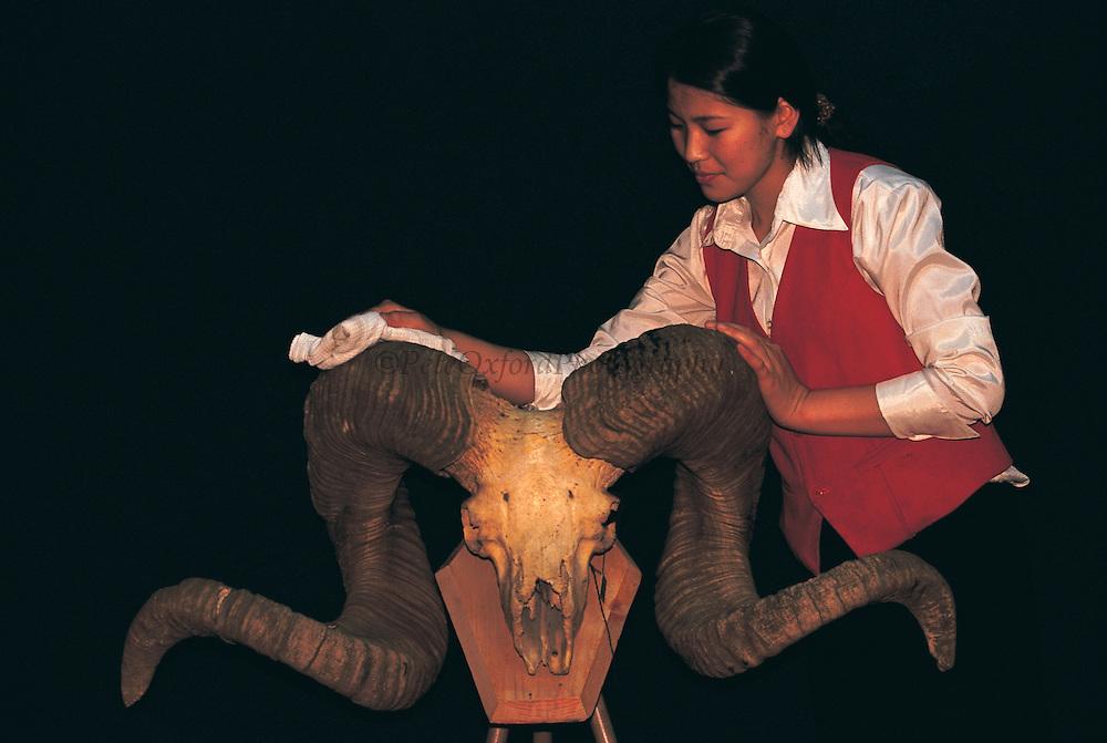 Argali sheep horns<br /> (Ovis ammon) from hunting museum<br /> Ulaanbaatar<br /> Gobi Desert<br /> Mongolia<br /> Range: Pamir to Mongolia & Tibetan Plateau