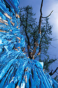 Tree with 100 Branches<br /> near Chuluut River Canyon<br /> Arkhangai Aimag<br /> Central Mongolia