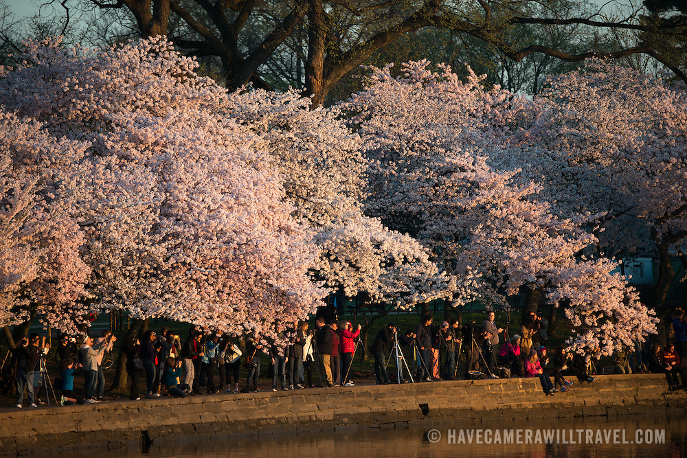 Crowds gather along the waterfront of the Tidal Basin as the sun rises and the cherry blossoms are blooming.