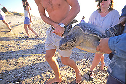 Bringing Black Sea Turtle To Lab