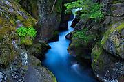 Avalanche Creek, Glacier National Park