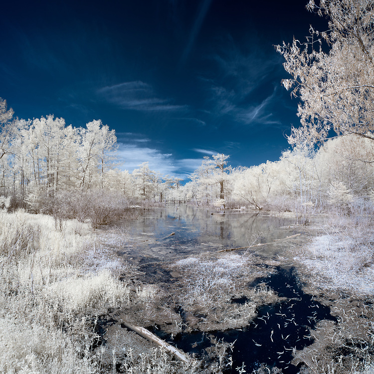Lake Martin Faux Color Infrared–Multi-row Panoramic Photograph