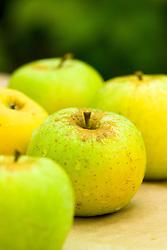 Apple 'Greensleeves' - Malus