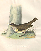 Northern Waterthrush (Seiurus aquaticus), color plate of North American birds from Fauna boreali-americana; or, The zoology of the northern parts of British America, containing descriptions of the objects of natural history collected on the late northern land expeditions under command of Capt. Sir John Franklin by Richardson, John, Sir, 1787-1865 Published 1829