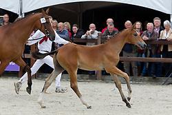 15 - Gerando<br /> KWPN Paardendagen 2011 - Ermelo 2011<br /> © Dirk Caremans