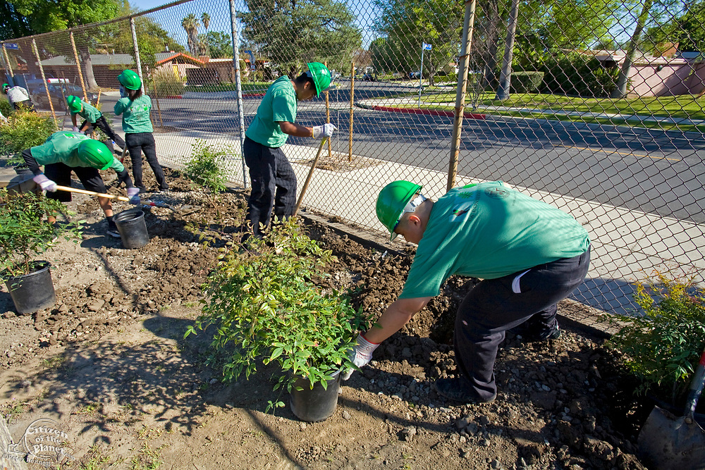 LA Conservation Corps helping with Tree Planting at Calvert Elementary School in Woodland Hills. Los Angeles