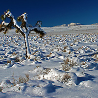 High desert plateau with snow-covered Joshua tree after a winter storm, Death Valley National Park, California.