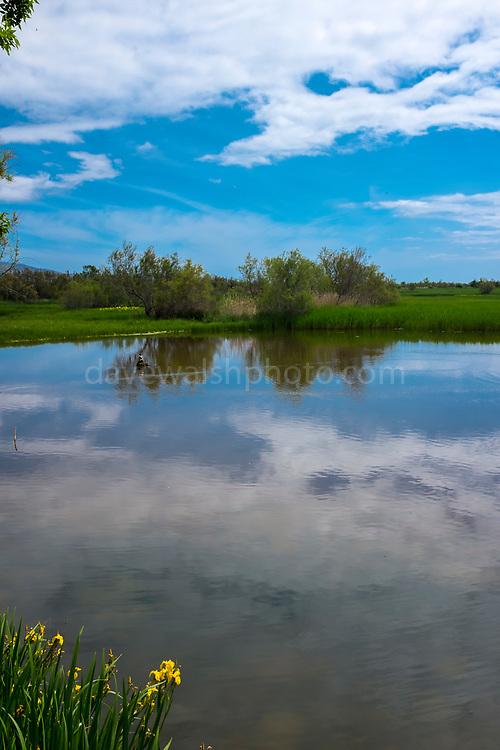 Estany del Cortalet, Aiguamolls de l'Empordà Natural Park, the 2nd most important wetland area in Catalonia.