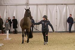 Barbancon Mestre Morgan, FRA, Sir Donnerhall II Old<br /> Jumping Mechelen 2018<br /> © Hippo Foto - Sharon Vandeput<br /> 27/12/18