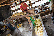 Cassava is first peeled and then ground by hand in order to prepare the flour. This work was speeded up when, in the Amerindian Community of Katoonarib, they introduced this new equipment with an internal combustion engine.