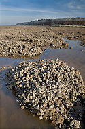 Mussel Beds Hunstanton Norfolk UK November