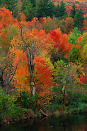 Fall Trees, Hudson River, North Creek, Adirondack Park, New York
