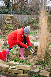 Cutting down grasses with shears in winter or early spring before they start to re-grow. Calamagrostis