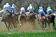 27 March 2010 : The field heads to the backstretch for the second time in the training flat race.