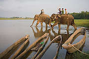 Park rangers riding on the backs of elephants ford the Rapti River into Royal Chitwan National Park, Terai, Nepal.