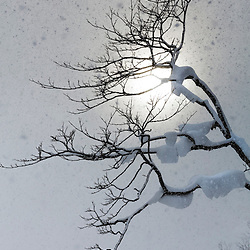 NISEKO WINTER TREES LOVELY