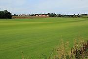 Large field of commercial grass grown as turf, Alderton, Suffolk, England, UK
